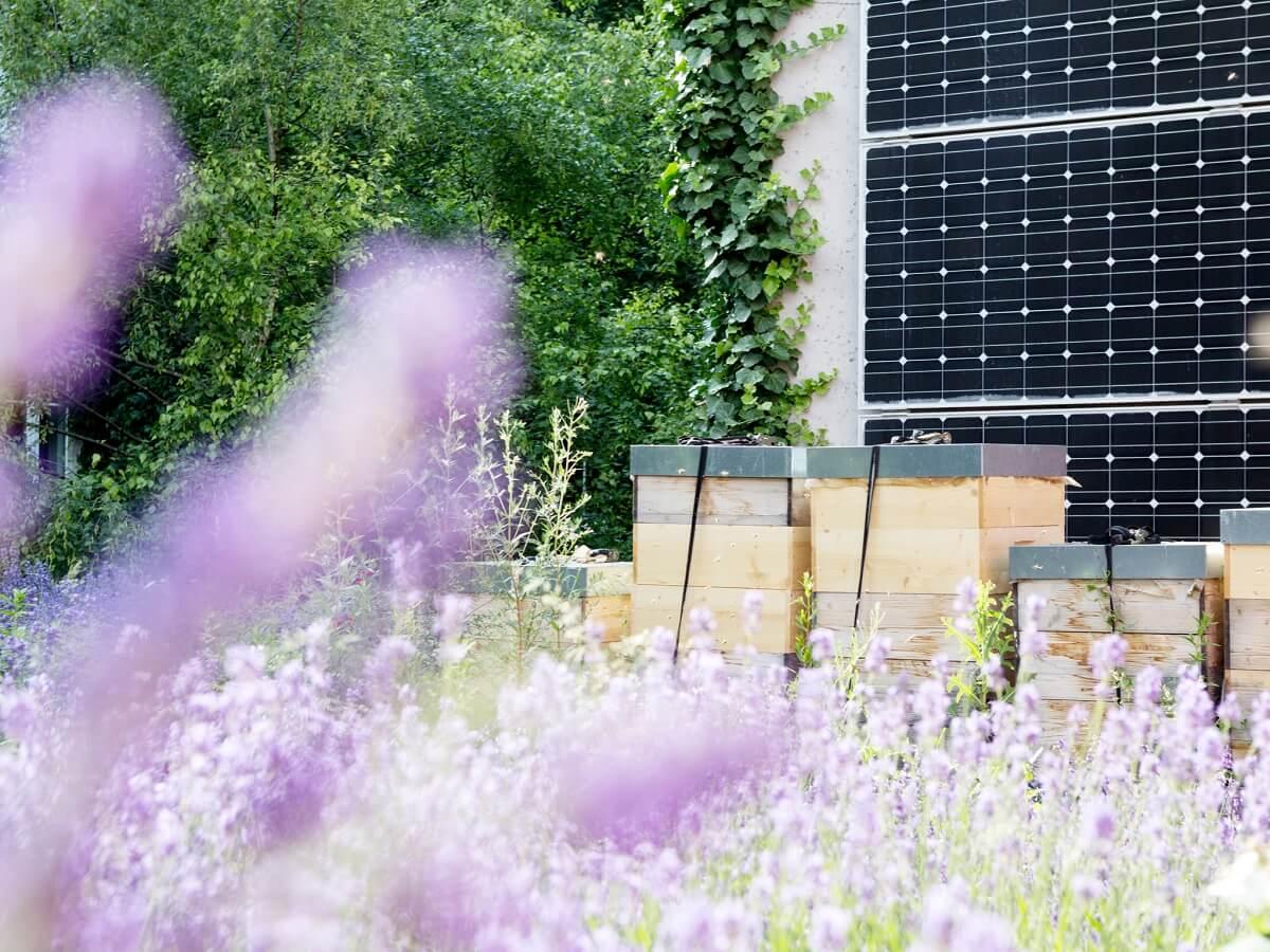 boutiquehotel-stadthalle-Lavendeldach-Bienenstoecke-Photovoltaik