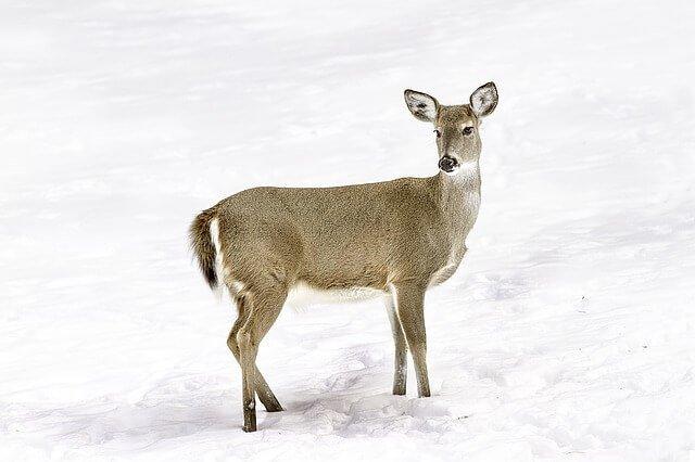 Wildtiere beobachten Nationalpark umweltschutz