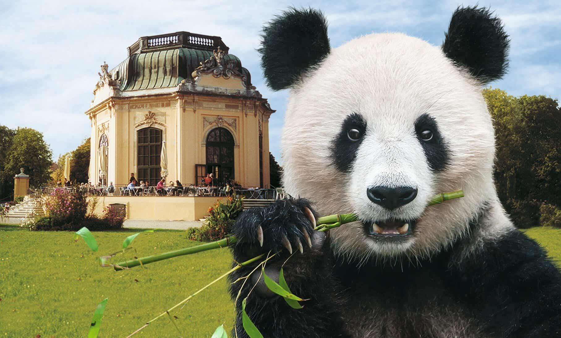Tiergarten Schönbrunn Angebot vom Austria Trend Hotel