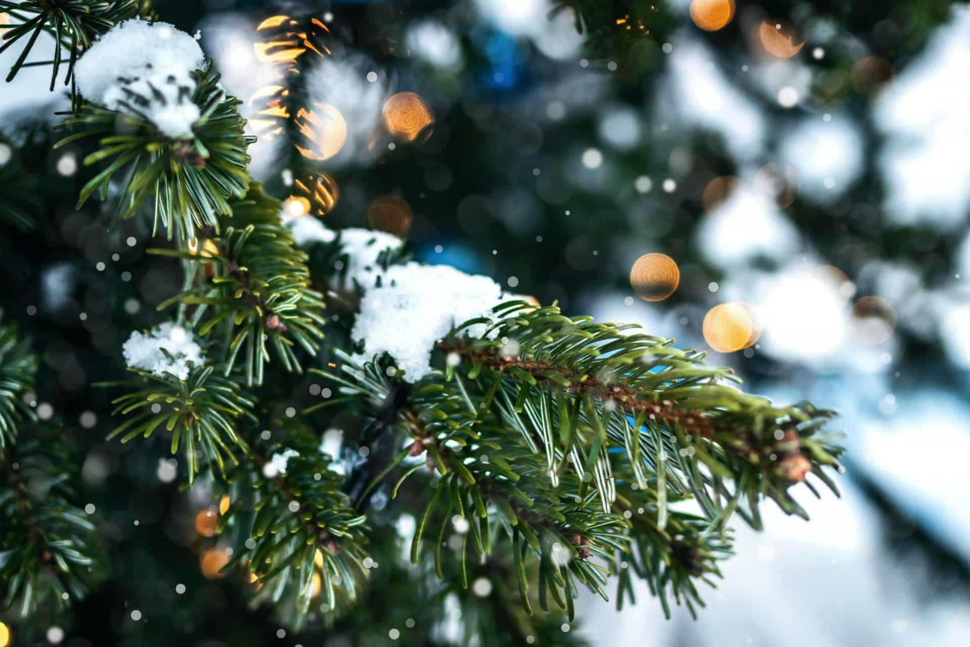 grüne Weihnacht