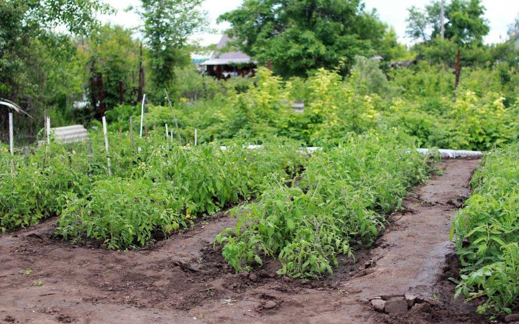 Gemüsegarten Umwelzeichen