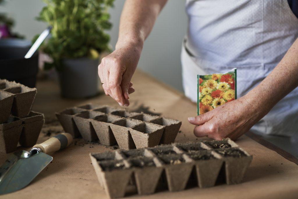 Samen anpflanzen am Umweltzeichentag