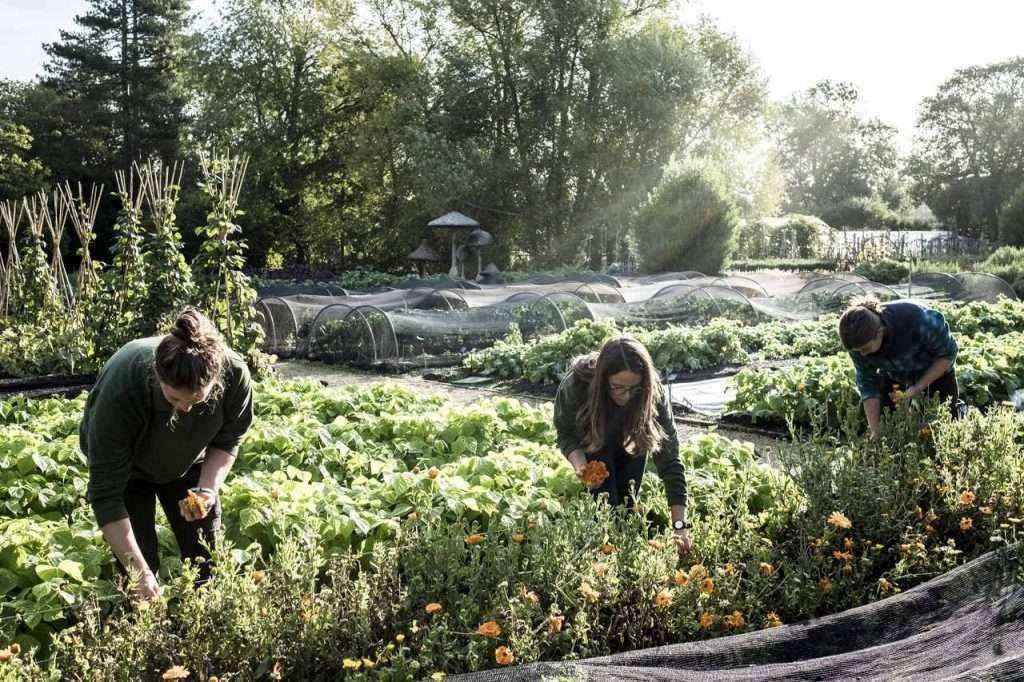 Umweltzeichen Hotels essbare Blüten (2)